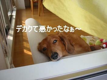 ソファにて④...♪