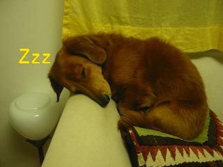 お寝んねZz...