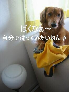 ぼくが洗うねん♪