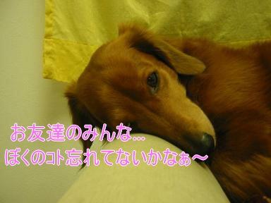 20080110_231147529.jpg