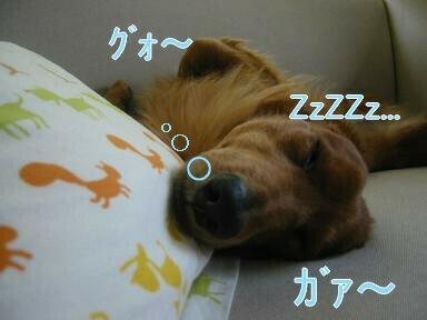 睡眠中zzz