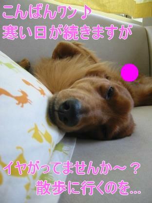 寝起き...