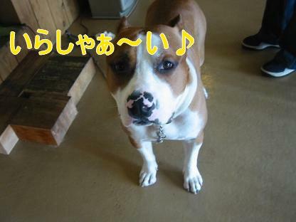 看板犬の俺①