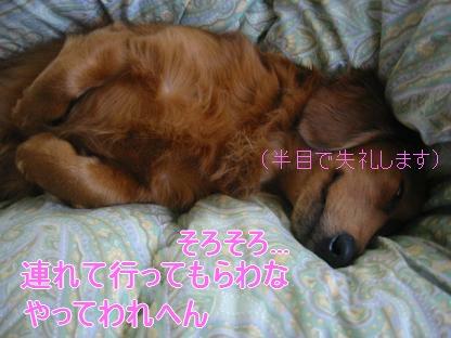 20080203_004425859.jpg