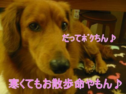 20080204_204340997.jpg
