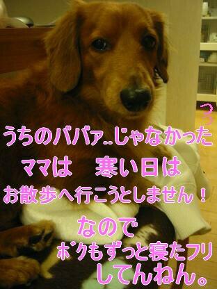 20080204_204346425.jpg