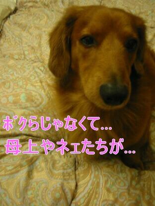 20080204_210441580.jpg