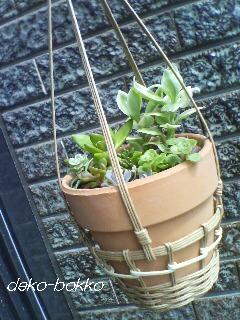 寄せ植え 吊り鉢 2011.7
