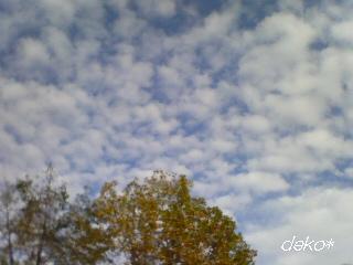 秋の雲。。。