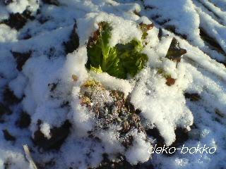 雪景色。。。2012.2.3