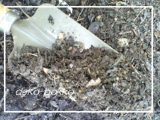 桜の腐葉土