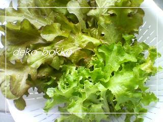 グリーンリーフ収穫 2011.5