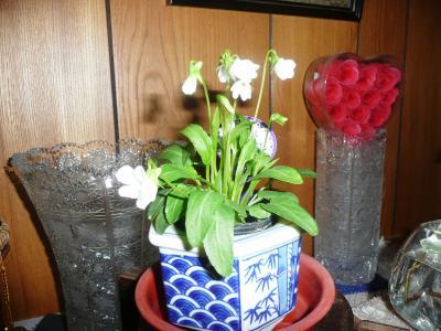 6ソーラー玄関の花