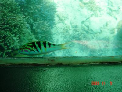 石垣島珊瑚スポット3