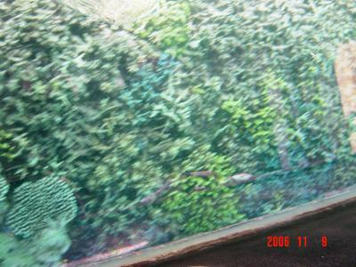 石垣島珊瑚スポット4
