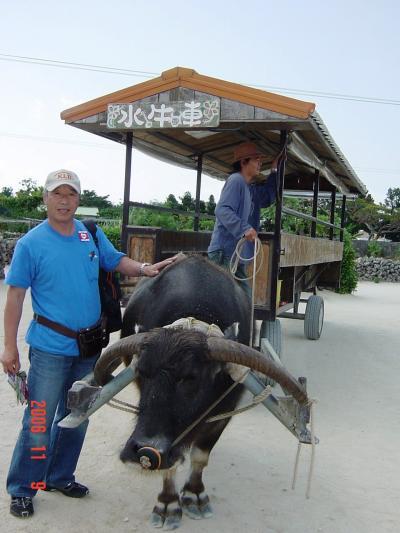 石垣島西表水牛車1