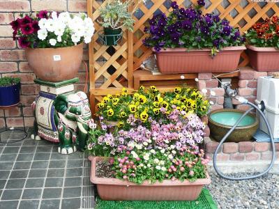 玄関前の花1