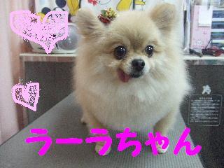 2008_0105ラーラちゃん