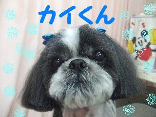 2008_0112カイくん2