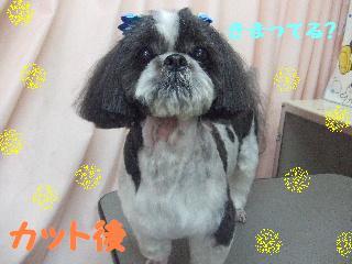 2008_0112ふみえ0027カイくん1