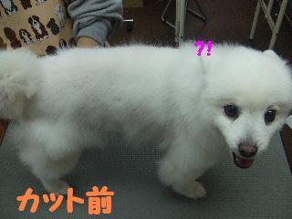 2008_0112ユキちゃん