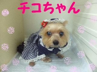 2008_0112チコちゃん