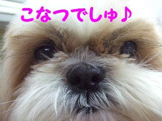 2008_0201ふみえ0091