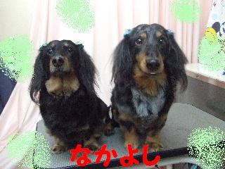 2008_0201ふみえ0125