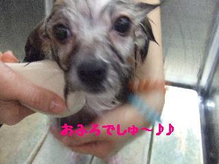 2008_0204ふみえ0020