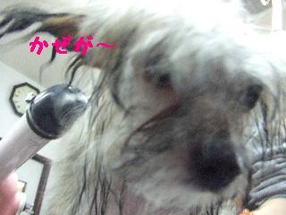 2008_0204ふみえ0022