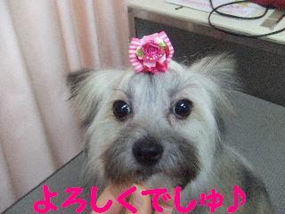 2008_0204ふみえ0027