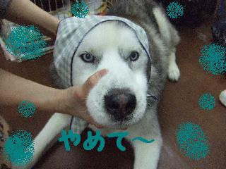 2008_0204ふみえ0028