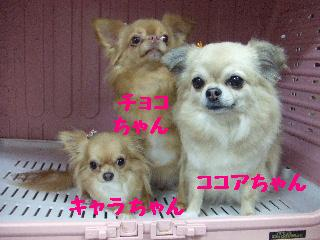 2008_01190007.jpg