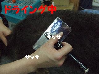 2008_01220017.jpg