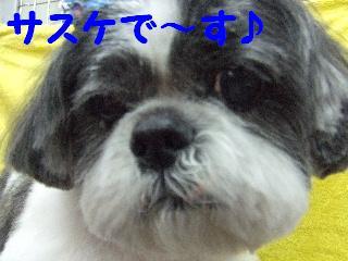2008_01250059.jpg