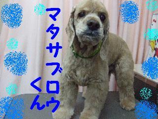 2008_01250085.jpg