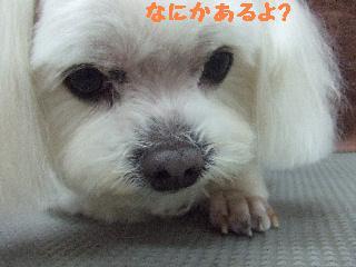 2008_02080035.jpg