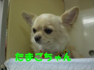 CIMG0699.jpg