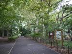 林試の森11