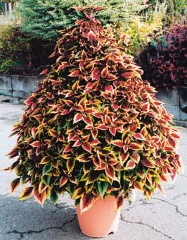 topiary-waltatarner.jpg