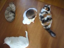 息子と3猫娘
