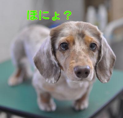 20110814-chochi-2.jpg