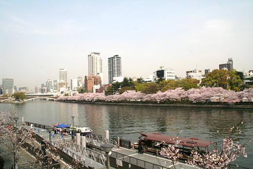 2011天満橋の桜
