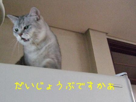 2007_07140003-2w.jpg