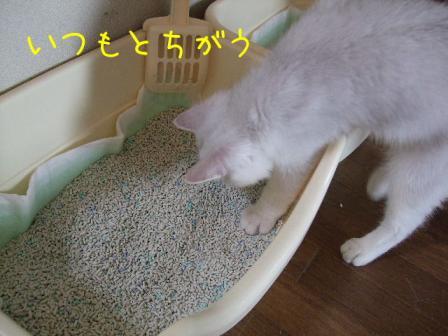 2007_07290035w.jpg