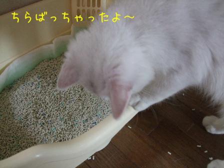 2007_07290042w.jpg