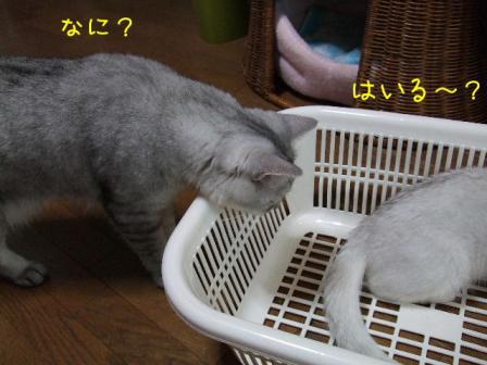 2007_07300006w.jpg