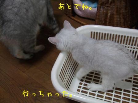 2007_07300010w.jpg