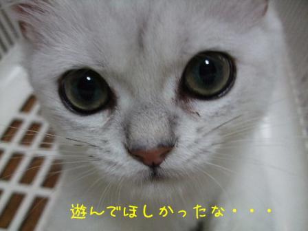2007_07300015w.jpg