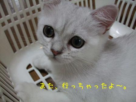 2007_07300020w.jpg
